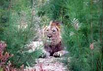 Sanbona Game Reserve