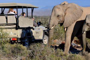 Sanbona Wildlife Reserve är en riktigt bra safari nära Kapstaden. Här ses elefanter hälsa på safaribilen.