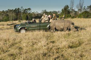 Gondwana Game Reserve är en fullskalig privat reservat med noshörningar, bra för safari nära Kapstaden.