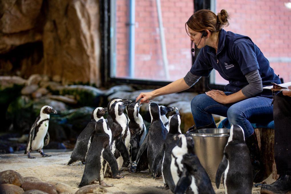 Two Oceans Aquarium, Kapstaden