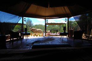 Inverdoorn-reservatet är bra om du vill på safari nära Kapstaden
